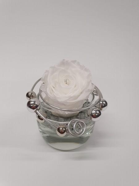 Infinity Rose klein weiß