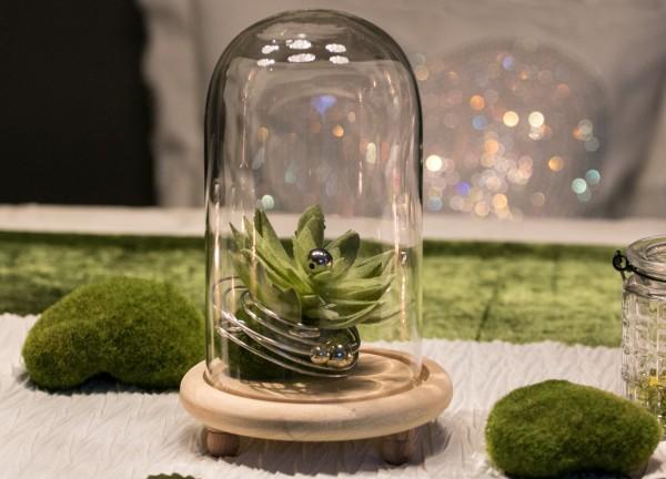 Tischdekoration Nr. 77 Glasglocke mit Sukkulente, Moospucker & Draht
